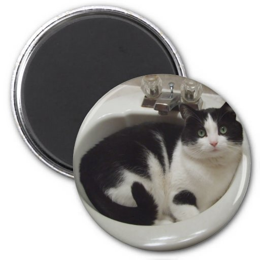 Cat lovers delight magnet