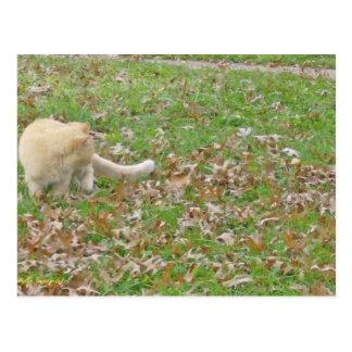 Cat Loves the Falling Leaves Postcard