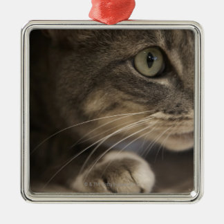 'Cat lying down, close-up (focus on cat's face)' Christmas Ornament