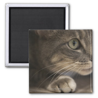 'Cat lying down, close-up (focus on cat's face)' Square Magnet