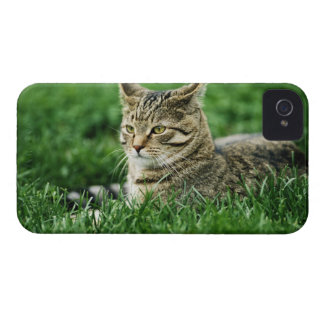Cat lying in grass iPhone 4 cover