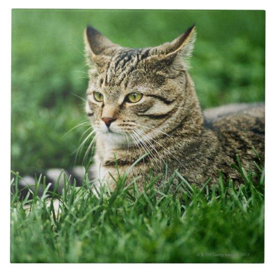 Cat lying in grass tile