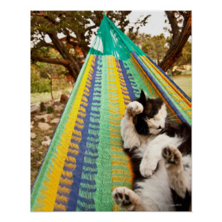 Cat lying in Mayan Mexican hammock Poster