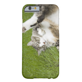 Cat lying on grass, close-up barely there iPhone 6 case