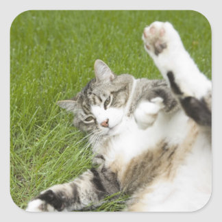 Cat lying on grass, close-up square sticker