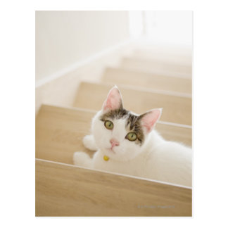 Cat lying on stairs postcard