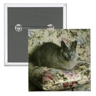 Cat, Minnie, Tonkinese. 15 Cm Square Badge