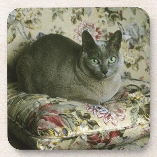 Cat, Minnie, Tonkinese. Beverage Coaster