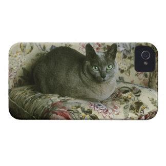 Cat, Minnie, Tonkinese. iPhone 4 Case