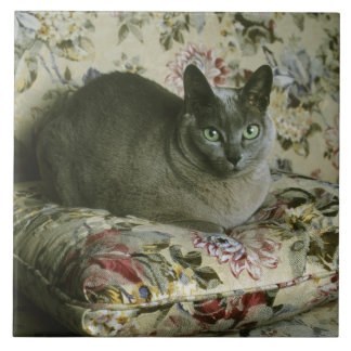 Cat, Minnie, Tonkinese. Large Square Tile