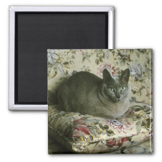 Cat, Minnie, Tonkinese. Magnet