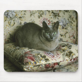 Cat, Minnie, Tonkinese. Mouse Pad