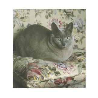 Cat, Minnie, Tonkinese. Notepad