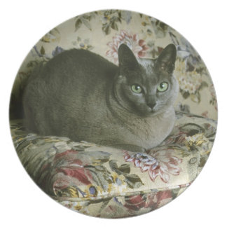 Cat, Minnie, Tonkinese. Party Plates