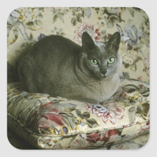 Cat, Minnie, Tonkinese. Square Sticker
