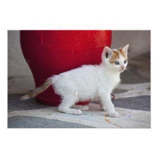 Cat, Mykonos, Greece Photo