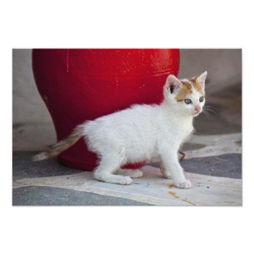 Cat, Mykonos, Greece Photographic Print