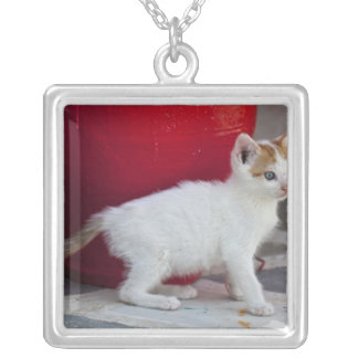 Cat, Mykonos, Greece Silver Plated Necklace