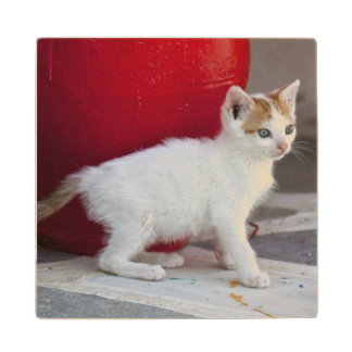 Cat, Mykonos, Greece Wood Coaster