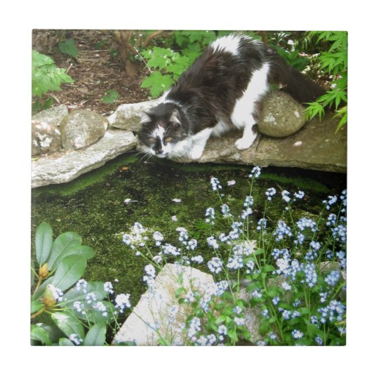 Cat named Gandalf and forget me nots -