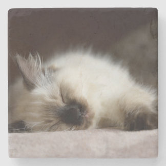Cat napping coaster