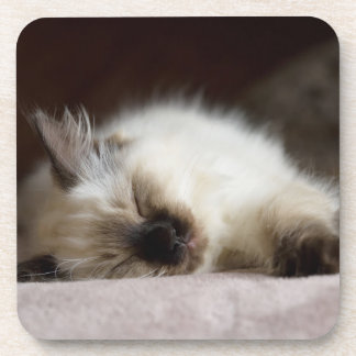 Cat napping coasters