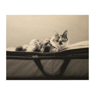 Cat on Bag Wood Print