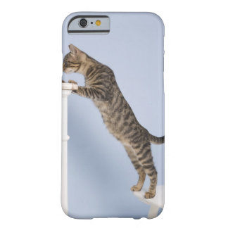 Cat on Chair, Dusseldorf, North Barely There iPhone 6 Case