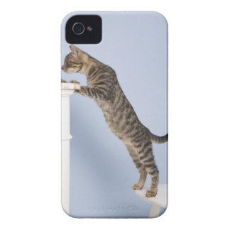 Cat on Chair, Dusseldorf, North iPhone 4 Case-Mate Case