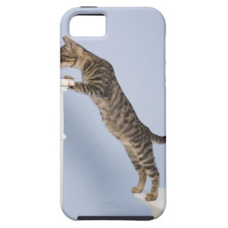 Cat on Chair, Dusseldorf, North iPhone 5 Covers
