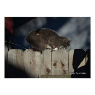 Cat on Fence (14) Poster
