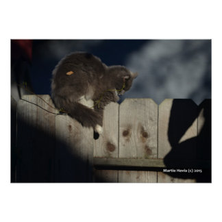 Cat on Fence (1) Poster