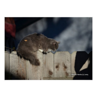 Cat on Fence (2) Poster