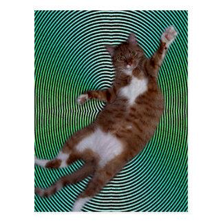 Cat on Hypnotic Background Postcard