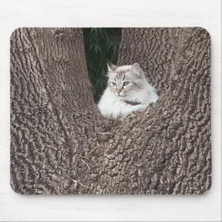 cat on Oak tree Mouse Pad