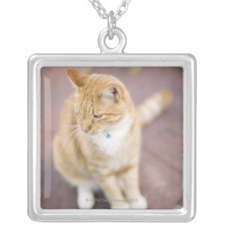 Cat on path to home, close-up (focus on head) silver plated necklace