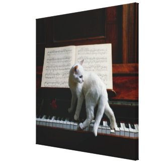 Cat on piano canvas print
