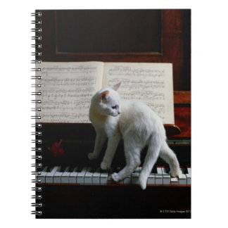 Cat on piano notebook