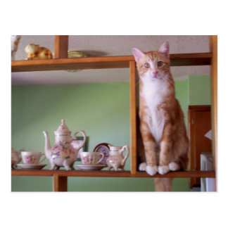 cat on shelf postcard