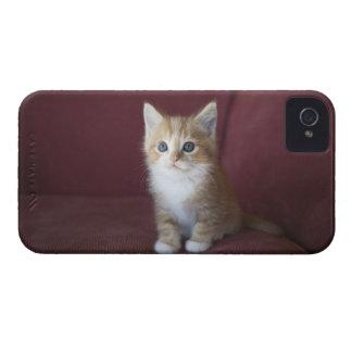 Cat on sofa iPhone 4 case