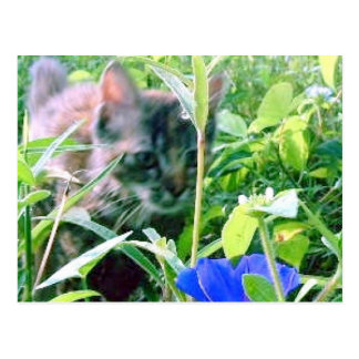 Cat on the Prowl in the Garden Postcard