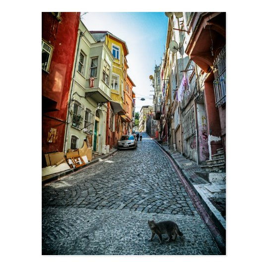 Cat on the street of Istanbul Postcard