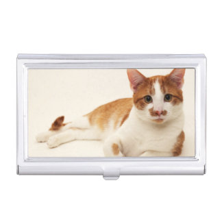 Cat on white background business card holder