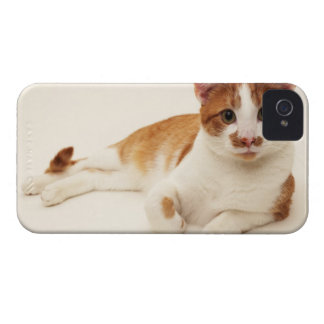Cat on white background iPhone 4 Case-Mate cases