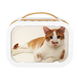 Cat on white background lunch box