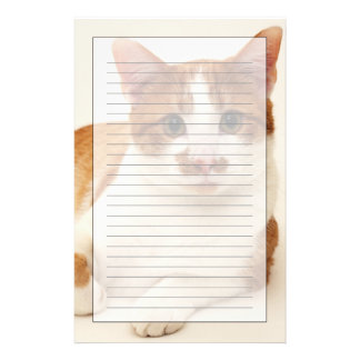 Cat on white background stationery