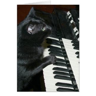Cat organ recital card