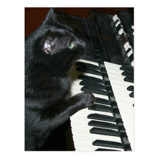 Cat organ recital postcard