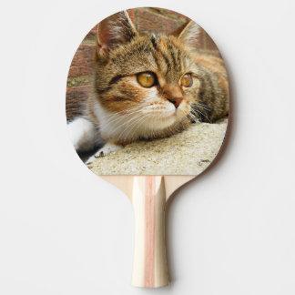 Cat Paddle
