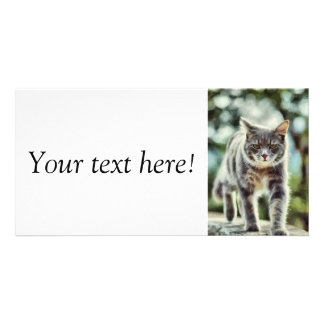 Cat painting personalised photo card